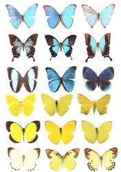 Картинка Метелики №6
